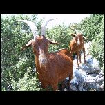 2005 08 06 07 WE Gorges Verdon/S3700175