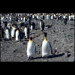 Antarctique/2