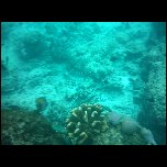 Indonesie/Indonesie Gili Lombok 02 Indonesie Gili Snorkeling IMAG0414