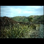 Nouvelle Zelande/13 New Zealand Clifden IMAG3580