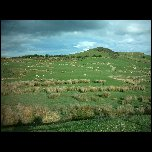 Nouvelle Zelande/13 New Zealand Clifden IMAG3592